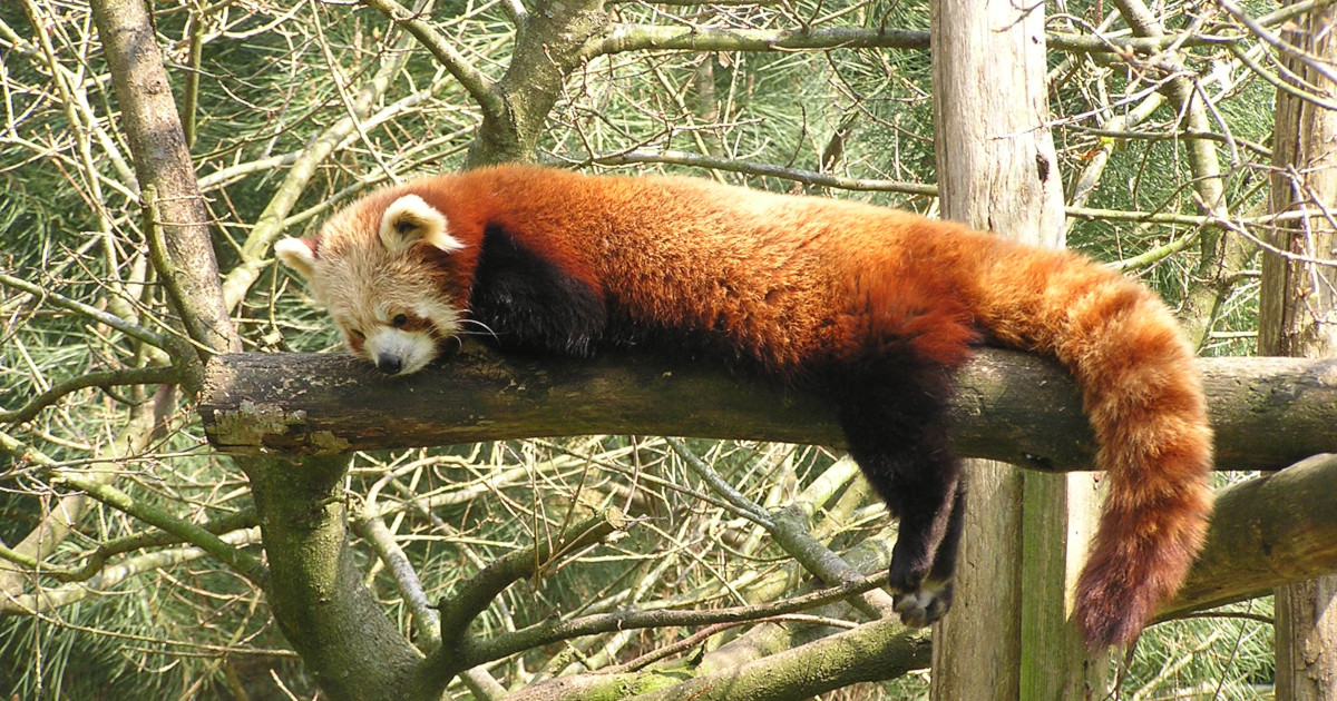 Call to Firefox Extension Developers