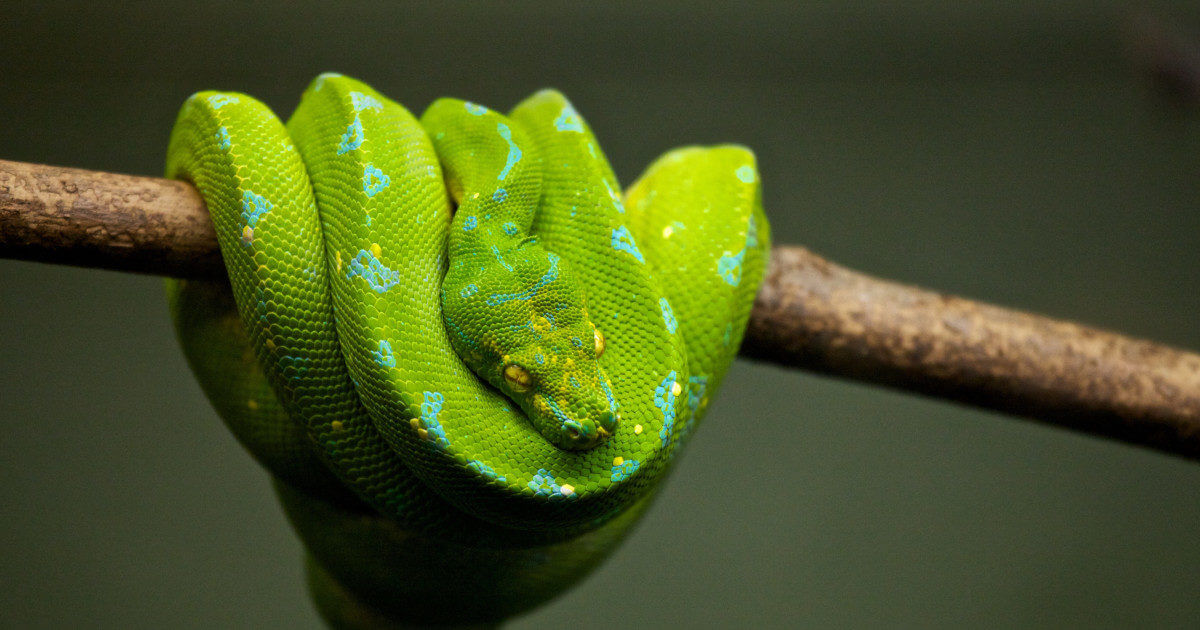 ActivePython vs  Open Source Python: What's the Difference