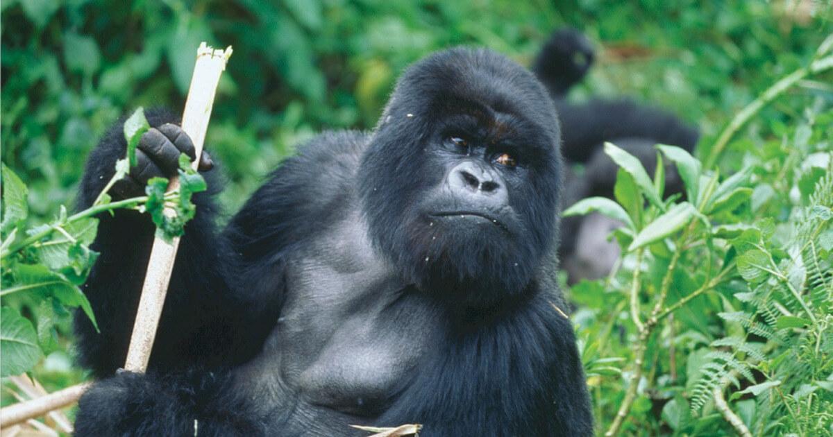 Creating a Web App Using the Golang Gorilla Web Toolkit