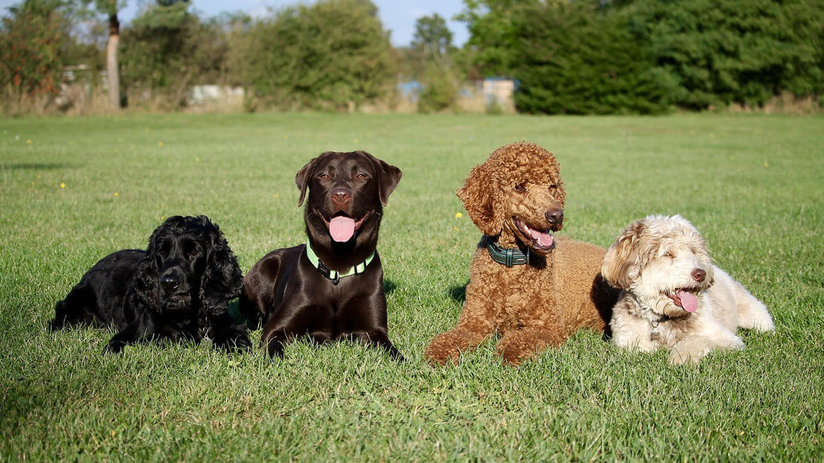 Poodle, Pug or Weiner Dog? Deploying a Dog Identification