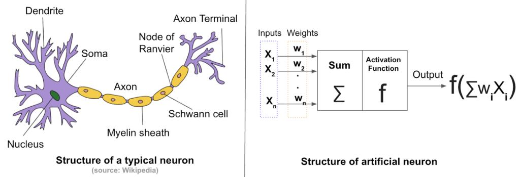 Real vs artificial neurons